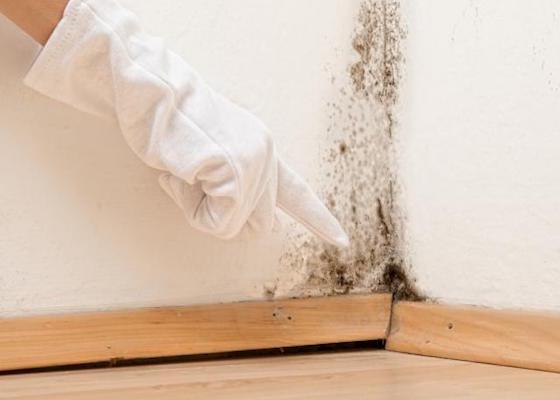 Comment traiter un mur qui moisit ?