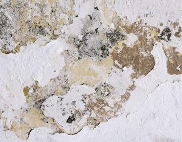 Comment traiter les remontées capillaires sur les murs ?