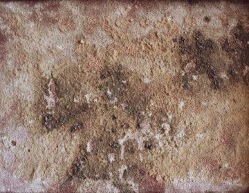 Quels sont les effets de la moisissure sur la santé ? La moisissure sur les murs est-elle dangereuse ?